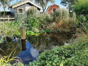 pond and glamping pods at seaways